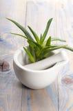 Aloe vera - medicina di erbe Immagini Stock Libere da Diritti