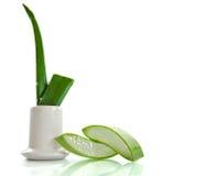 Aloe vera - medicina di erbe Fotografie Stock