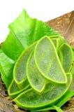 Aloe Vera, medicina di erbe tailandese Immagini Stock Libere da Diritti