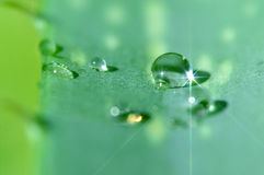 Aloe vera. Stock Photography