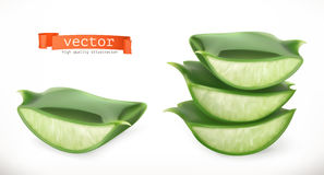 Aloe vera. Medicinal plant vector icon. Aloe vera. Medicinal plant 3d vector icon Royalty Free Stock Photos