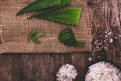 Aloe vera Stock Image