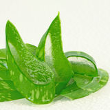 Aloe Vera (mulino di aloe barbadensis ) una medicina di erbe molto utile Immagini Stock Libere da Diritti