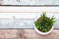 Aloe Vera nel bianco del vaso sul legno della plancia Immagini Stock Libere da Diritti