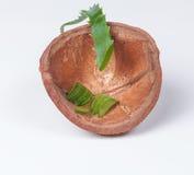 Aloe vera nelle coperture della noce di cocco Fotografia Stock