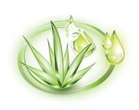Aloe vera och extrakt vektor illustrationer