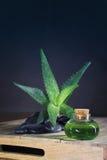 Aloe vera. Oil on black background Royalty Free Stock Photo