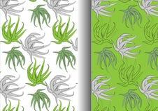Aloe Vera pattern  vector illustration Stock Photo