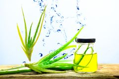 Aloe Vera In per exponeringsglas, aloe Vera Splash Royaltyfria Bilder