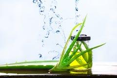 Aloe Vera In per exponeringsglas, aloe Vera Splash Royaltyfria Foton