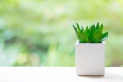 Aloe vera In piccoli vasi bianchi sulla tavola di legno Immagini Stock Libere da Diritti