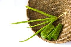 Aloe vera plant Royalty Free Stock Photos