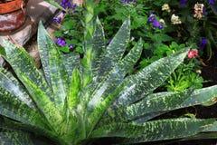 Bromeliad Plant Stock Photography