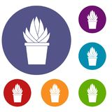 Aloe vera plant icons set Stock Photography