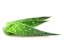 Aloe vera plant isolated on white background Royalty Free Stock Images