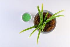 Aloe Vera Plant och aloe Vera Gel på vit bakgrund arkivfoton