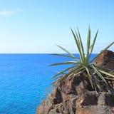 Aloe vera plant Stock Photography