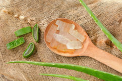 Aloe Vera plant sliced on spoon and Coconut fiber Stock Image