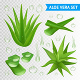 Aloe Vera Plant On Transparent Background stock abbildung