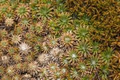 Aloe vera plants, tropical green plants tolerate hot weather. Stock Photos