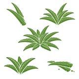 Aloe Vera Set vektor Royaltyfria Bilder