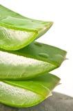 Aloe vera slices stock photos