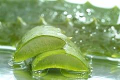 Aloe vera slices Stock Image