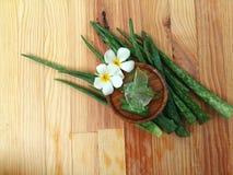 Aloe vera som så är ny för brunnsort och skönhet på wood bakgrund Arkivbilder