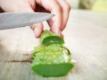 Aloe vera su bianco Fotografie Stock Libere da Diritti