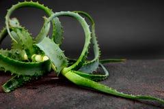 Aloe vera su fondo marrone Fotografia Stock Libera da Diritti
