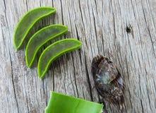 Aloe vera su struttura di legno Immagini Stock Libere da Diritti