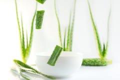 Aloe vera su un contenitore bianco Immagini Stock Libere da Diritti