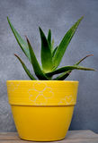 Aloe vera sul vaso Fotografie Stock Libere da Diritti