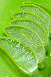 Aloe Vera,Thai herbal medicine. Stock Photo