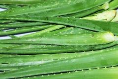 Aloe vera in una stalla nel mercato Immagine Stock