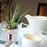 Aloe Vera und weißes China stockfotografie