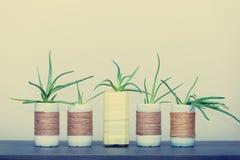 Aloe Vera in vaso upcycled Fotografia Stock
