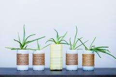 Aloe Vera in vaso upcycled Immagine Stock