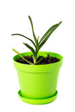 Aloe vera in vaso verde Fotografia Stock Libera da Diritti