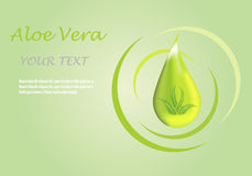 Aloe vera. Vector illustration; Aloe vera icon on a green background, can be used as a logo and promotional and advertising posters Royalty Free Stock Images