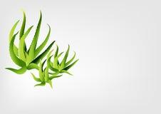 Aloe vera vector illustration Royalty Free Stock Photos