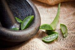 Aloe verde Fotografie Stock Libere da Diritti