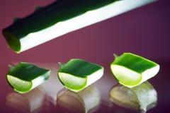 aloe verde Fotografia Stock
