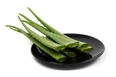 Aloe verde su fondo bianco Immagine Stock