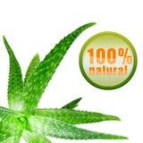 Aloe verde vera con l'icona isolata su bianco Immagine Stock Libera da Diritti