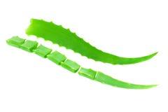 Aloe verde Vera del foglio Fotografia Stock