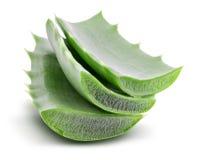 Aloe verde vera isolata su fondo bianco con il percorso di ritaglio Fotografia Stock Libera da Diritti