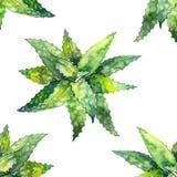 Aloe Watercolor σχέδιο της Βέρα λευκό απεικόνισης δακτυλικών αποτυπωμάτων ανασκόπησης Διανυσματική απεικόνιση