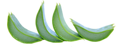 Aloe. On a white background Stock Photography