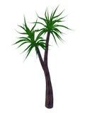 Aloebarberaeträd, a bainesii - 3D framför Arkivfoton